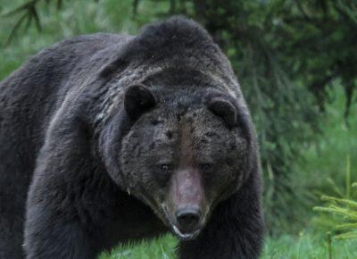 bear11564142066